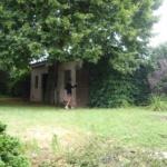 ancienne maison avec grand terrain